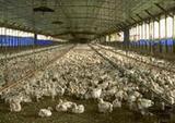 Poultryfacility