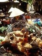 Vietnamfarmer_1